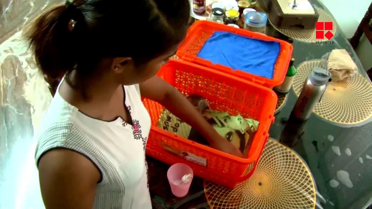 അലഞ്ഞു തിരിയുന്ന പൂച്ചക്കുഞ്ഞുങ്ങളുടെ  അമ്മയായി ഒരു കോളെജ് വിദ്യാര്ത്ഥിനി
