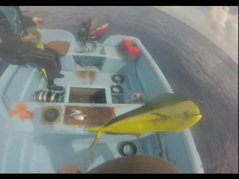 Local Fad Fishing In Dominican Rep, Mahi And Wahoo