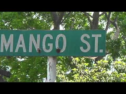 The House On Mango Street  YouTube