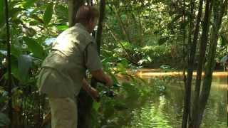 Real Adventure with Tomahawk: Amazonia  ...
