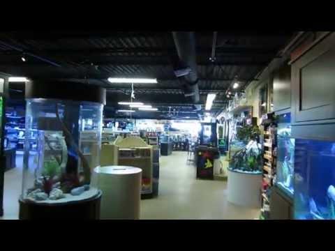 'Fish Gallery' Dallas