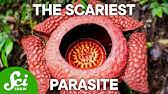 4 Parasites Too Creepy to Exist