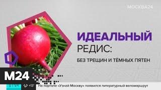 Фото Как избавиться от горьковатого привкуса редиса? - Москва 24