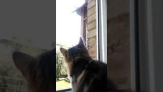 Котейка, окно в большой мир... и голубь)