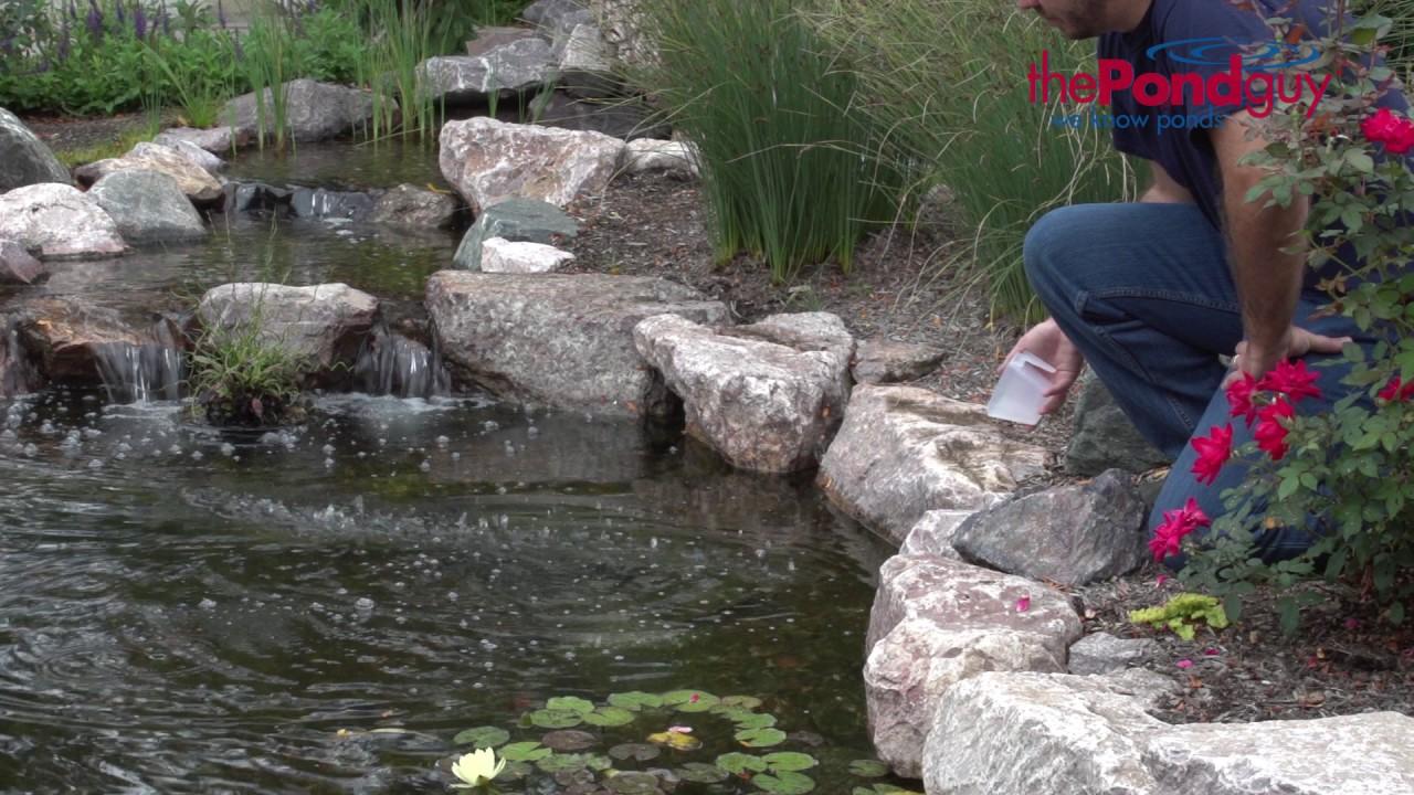 The pond guy pond salt pond fish treatment youtube for Salt in koi pond