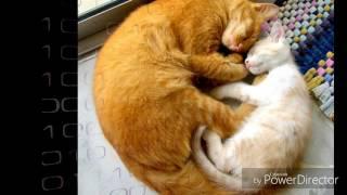 МакSим - Мама кошка