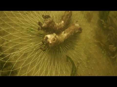 Раколовки подводная съемка, под водой, раки залазят в раколовку, Underwater Filming
