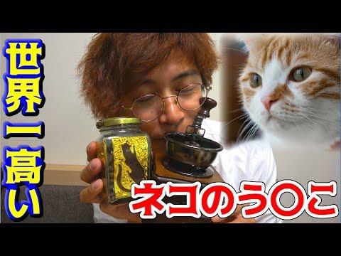ネコのう〇こで作るコーヒー飲んでみた【コピ・ルアク】