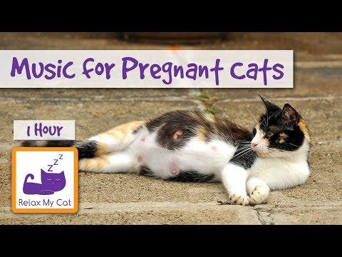 Music for Pregnant Cats, Help them Give Birth to Kittens Peacefully