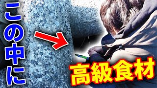 堤防の足元で高級食材【銀宝】を釣る!!