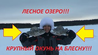 Рыбалка на блесну без подсадки поверить в себя РыболовныйГид РыбалкаКруглыйГод ПогодаКарелии 2021