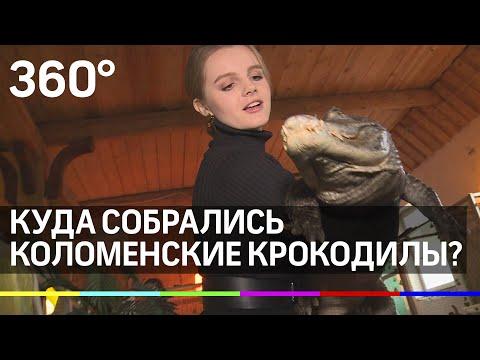 Куда собрались коломенские крокодилы?