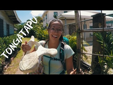 I can't believe I bought this | Traveling Tonga Day 13
