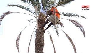 الميدان ياحميدان .. منافسة تنقسم الى ثلاث جولات في التسلق على النخل فمن الفائز | رحلة حظ 2