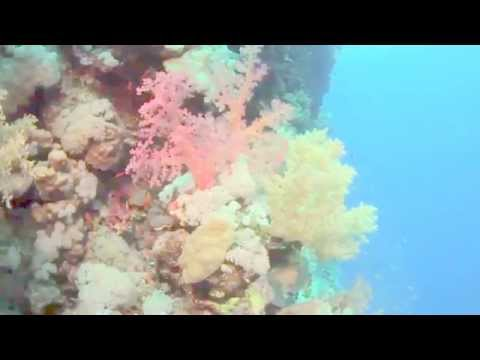 Marsa Alam Travel Video