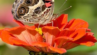 PLANT TAXONOMY ( Basics ) BSC 2nd Year
