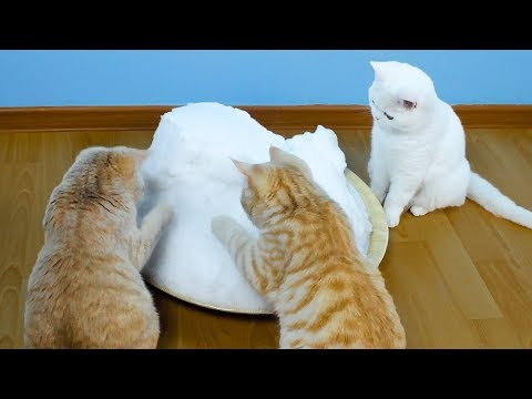 Mačke Su Prvi