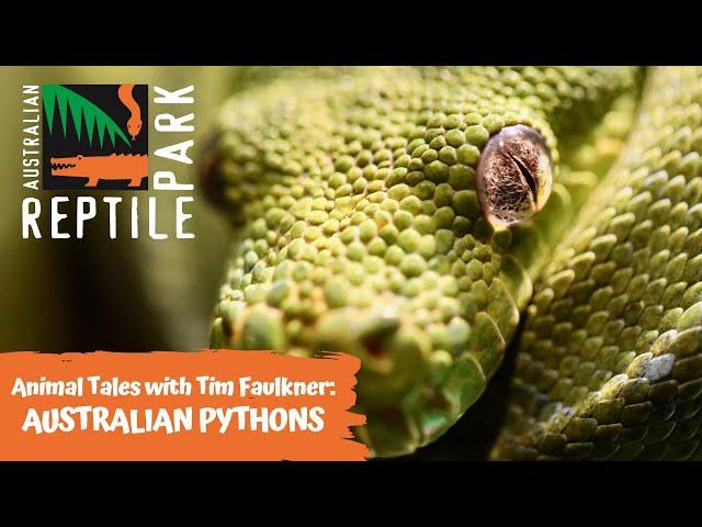 ANIMAL TALES WITH TIM FAULKNER | EPISODE 26 | AUSTRALIAN PYTHONS
