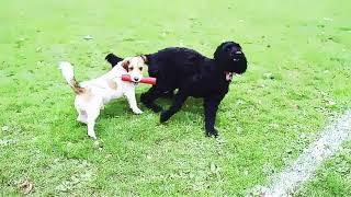 BD Hunde-Karikatur-test 5 1080p