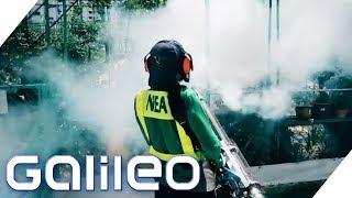 Bis 200$ Strafe! Die Moskito-Polizei in Singapur - Dengue-Fieber im Vormarsch! | Galileo | ProSieben