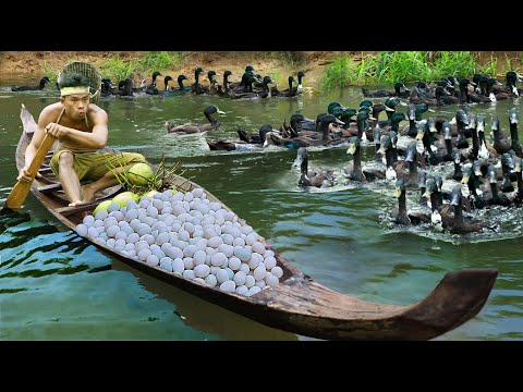 survival in the rainforest find lots of egg duck & cook duck with coconut Eating delicious