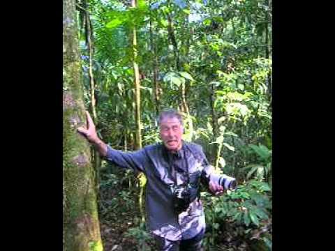 Manic organic in Ecuador