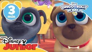 Bingo i Rolly w akcji | Pies hipersprzątający | Oglądaj w Disney Junior!