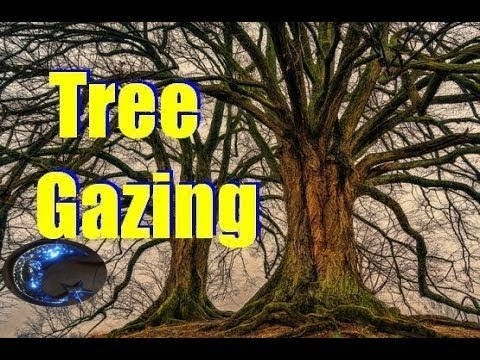 Expand Your Consciousness With Tree Gazing
