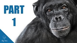 ANIMAL PORTRAIT RETOUCH: Part 1 (Photoshop) #60