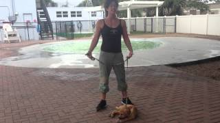 Dog Training In Miami, Fort Lauderdale, And All South Florida