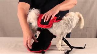 DOGonGEAR Pet Diaper Wrap - How to put (and keep) a pet diaper on your dog