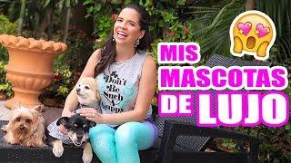 LAS MASCOTAS DE UN MILLONARIO! Tag de la Mascota - El Mundo de Camila Guiribitey