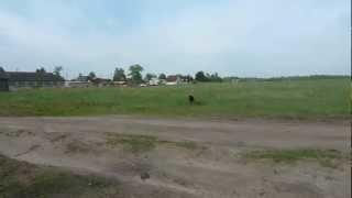 Испытания по поиску и подаче битой дичи 26.05.2012