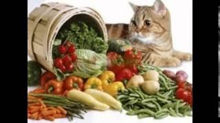 витамины для кошек гамавит
