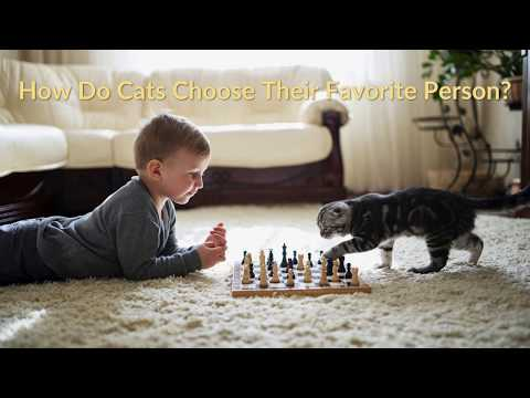 How Do Cats Choose Their Favorite Person?