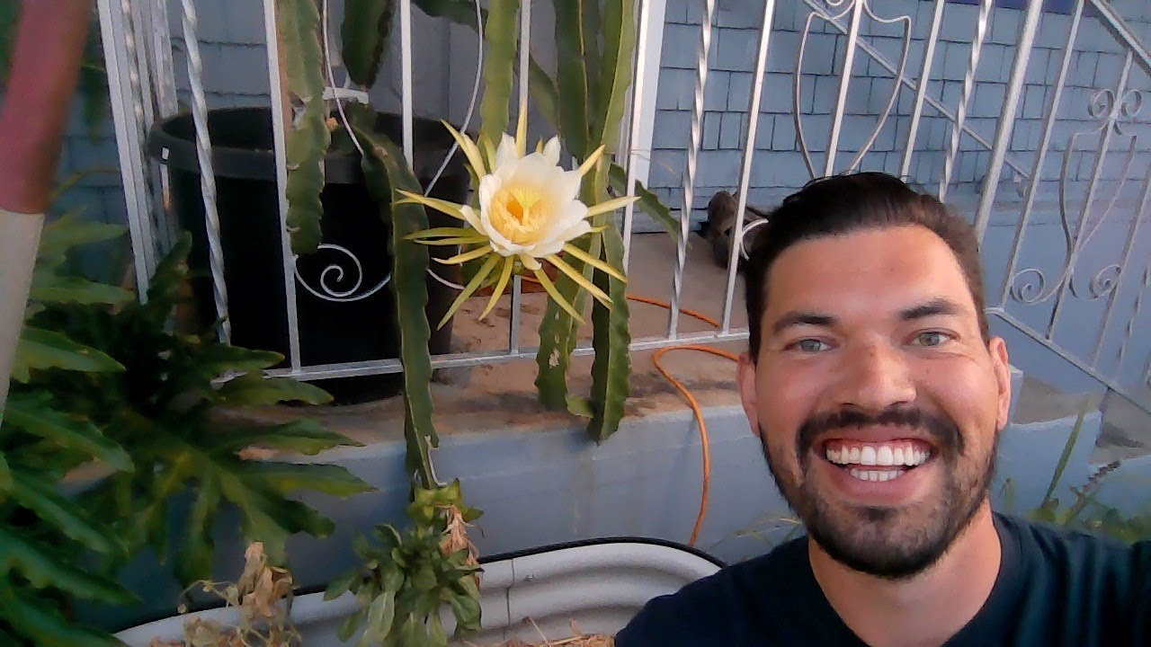 LIVE Dragonfruit Bloom and Gardening Q&A!