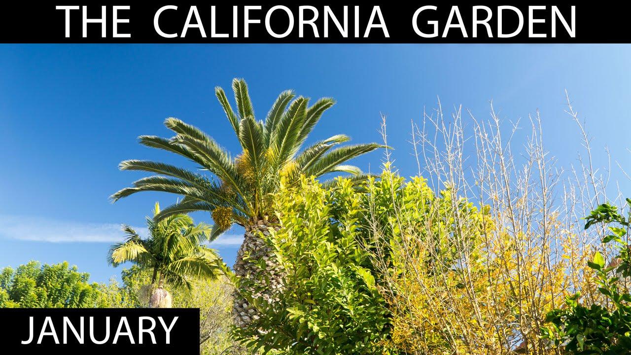 The California Garden In January + Garden Tour   YouTube