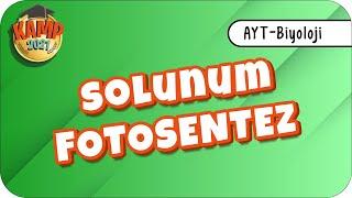 Fotosentez - Solunum | AYT Biyoloji #biyolojik