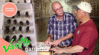 Vasili Learns More About The Benefit Of Insects In Your Garden  Full Episode  Vasili&#39s Garden