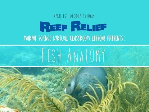 Lesson 5:  Fish Anatomy And Dissection