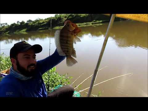 Muito peixe na pescaria com o meu Pai - Rio verde MG