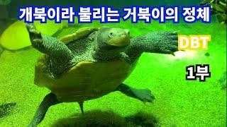 강아지보다 사람을 더 잘따르는 거북이!!!(DBT)