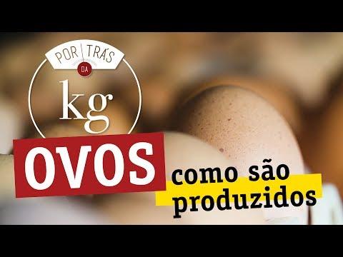 Ovos: como são produzidos? Como vivem as galinhas?