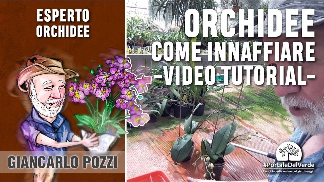 E Si Bagnano Le Orchidee Tutorial Con Giancarlo Pozzi