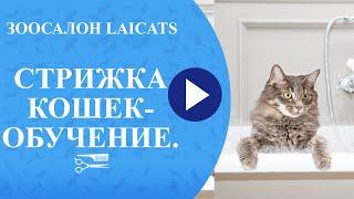 Стрижка кошек - обучение.
