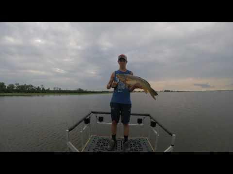 bow fishing the Horicon marsh pt2