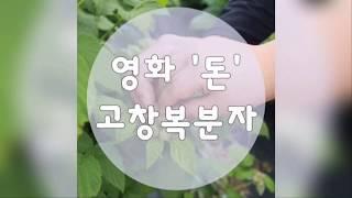 고창복분자베리팜 영화 '돈'에 출연하는 …