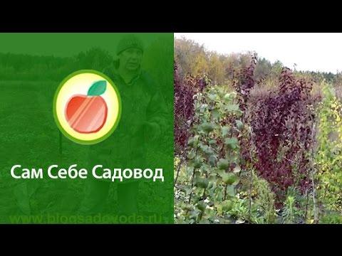 Питомник плодовых деревьев с нуля