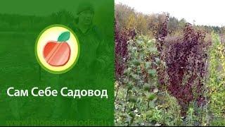 Питомник плодовых деревьев с нуля(Все подробности о видео проекте