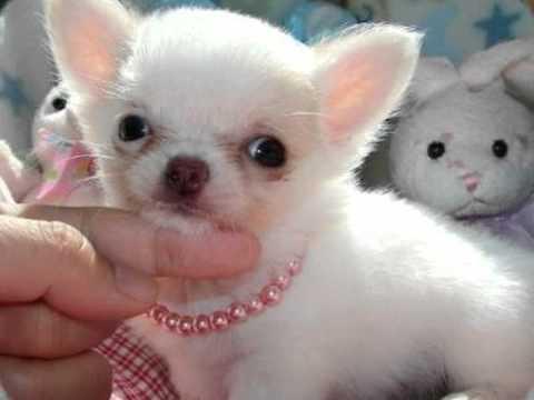 Cani di piccola taglia youtube for Cani da tenere in casa